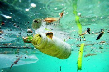 Estas 03 organizações estão lutando para salvar nossos oceanos !!!